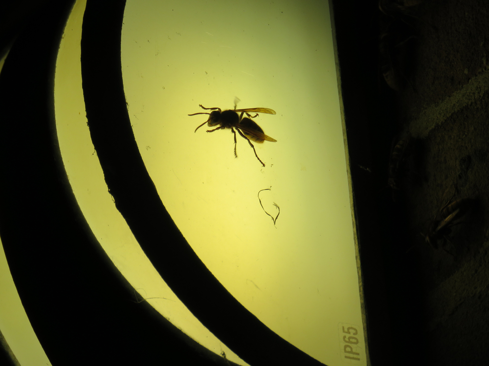 High light pollution could impact transmission of diseases through mosquitoes