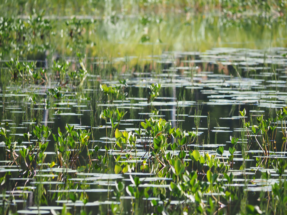 According to a study, managing peatlands can prevent future pandemics