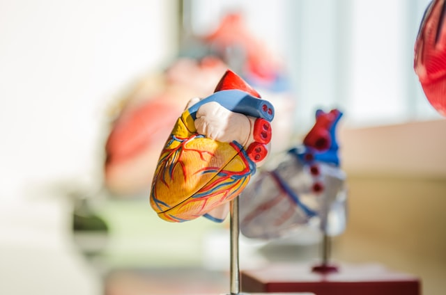 Cardiovascular co-morbidity in chronic kidney disease: Current knowledge and future research needs